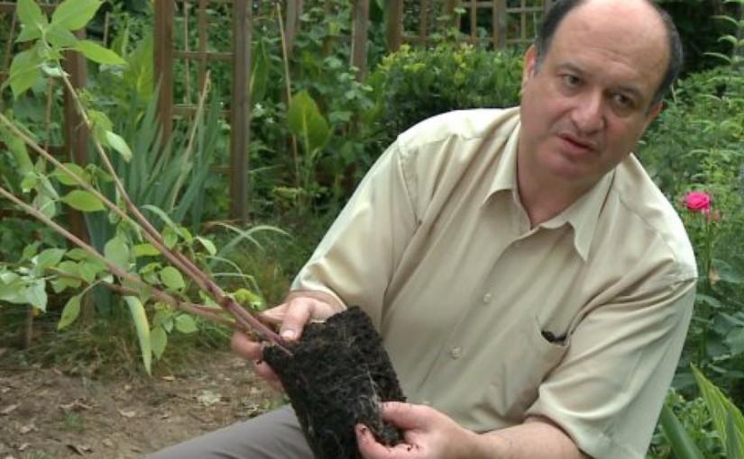 Di Giorno : l'homme qui faisait pousser les plantes… sans eau !