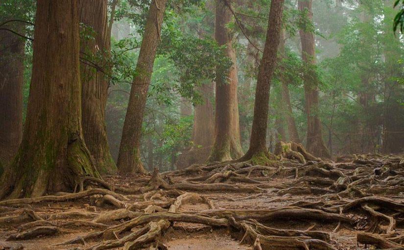 Les 3 racines de l'amour